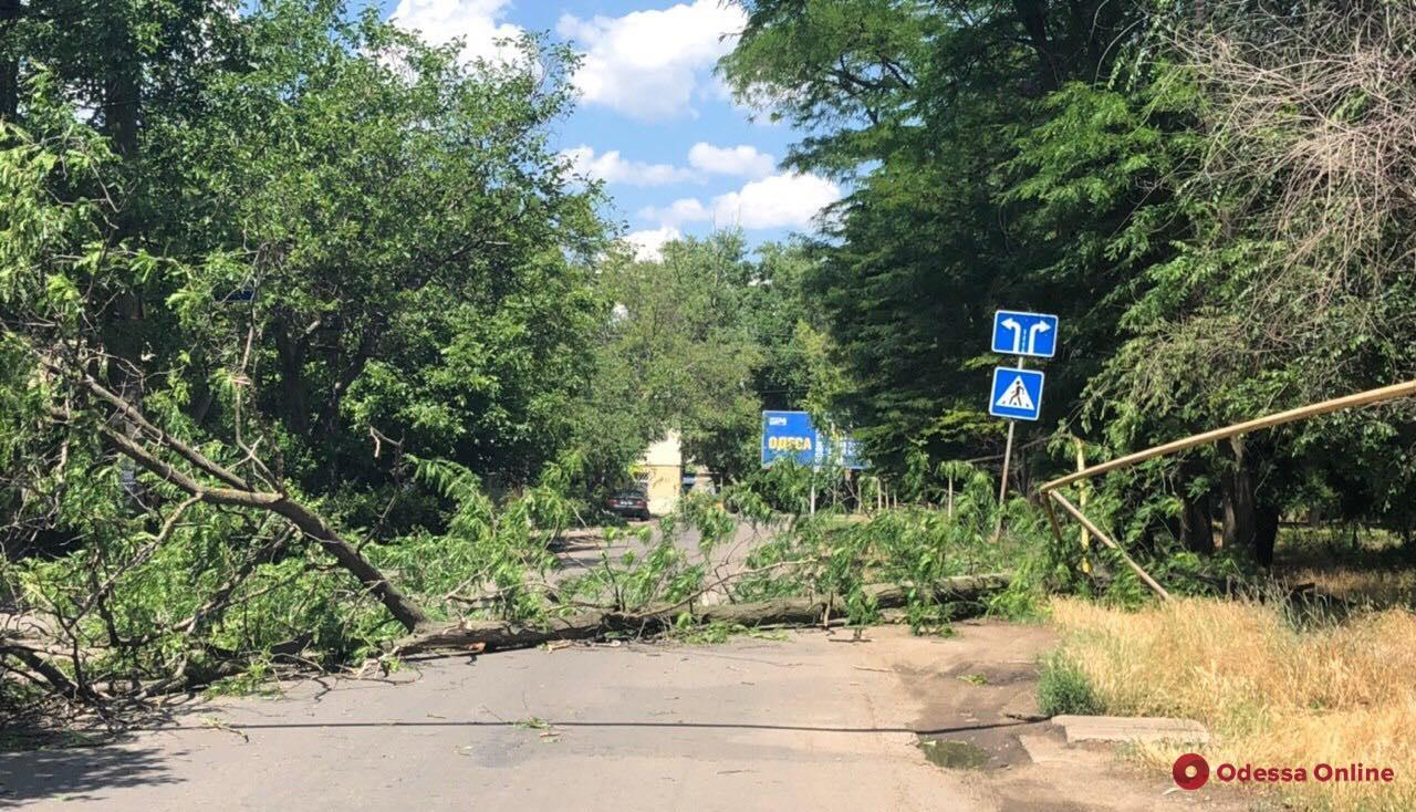 В Одессе упавшее на дорогу дерево повредило газовую трубу