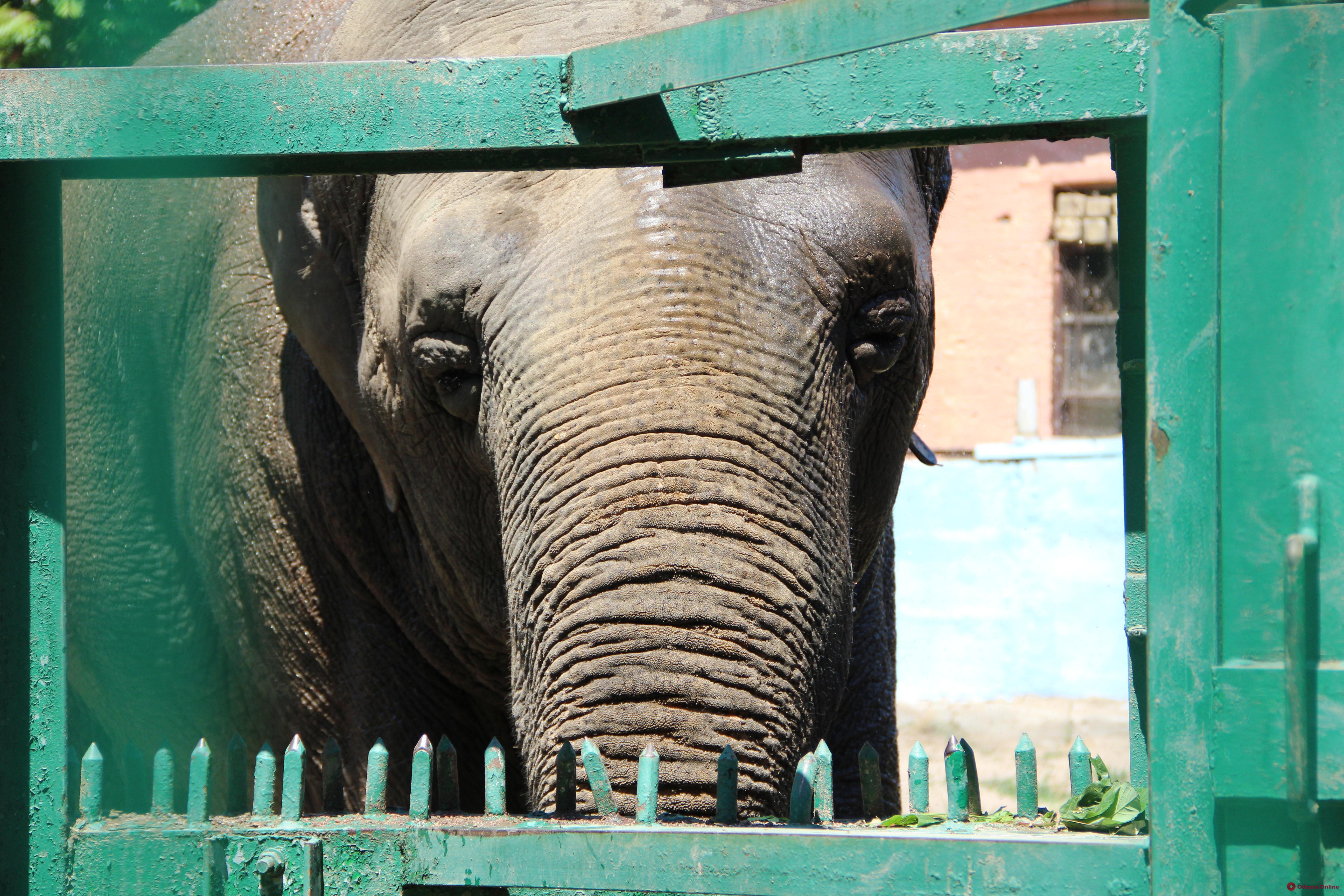 Одесский зоопарк отметит 97-летие