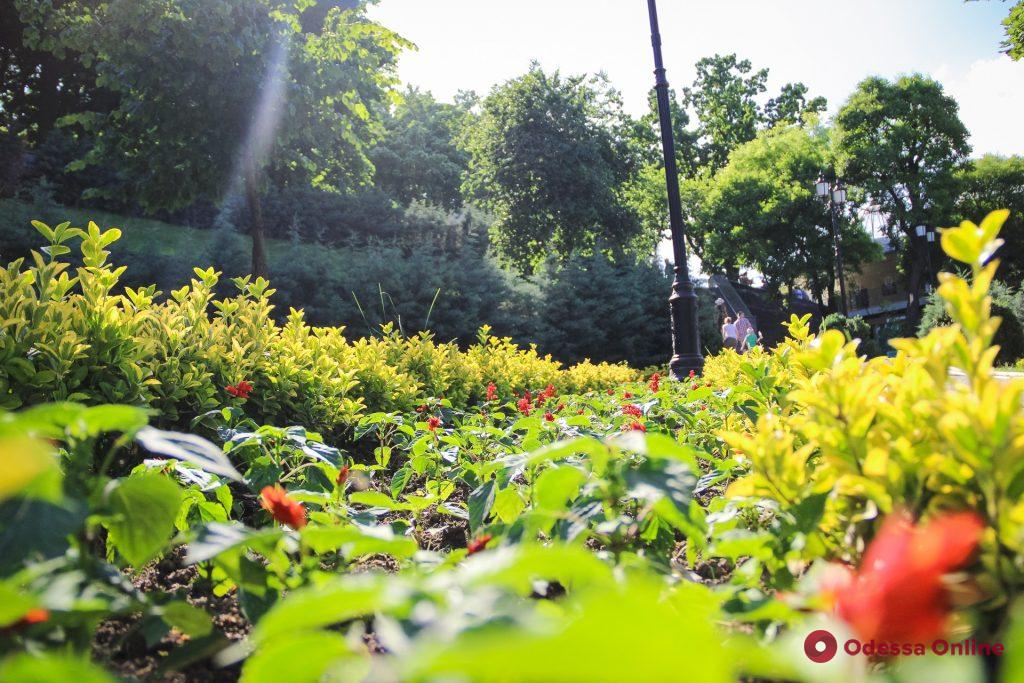 Одесса пестрит и благоухает от разнообразия цветов (фоторепортаж)