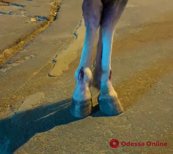 Раны на ногах и недоедание: одесские прокатчики продолжают издеваться над лошадьми