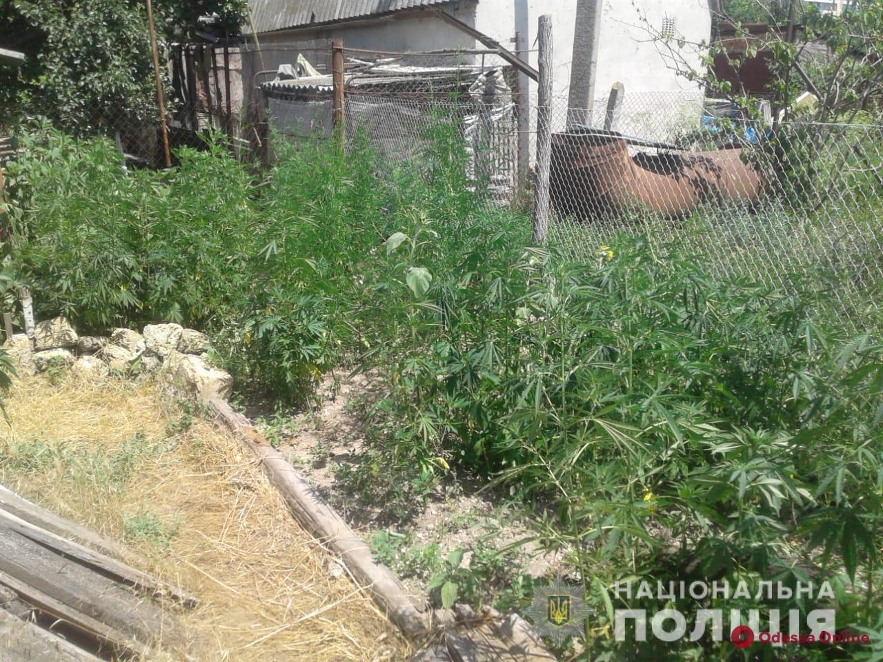 В Одесской области наркоаграрий выращивал на огороде коноплю
