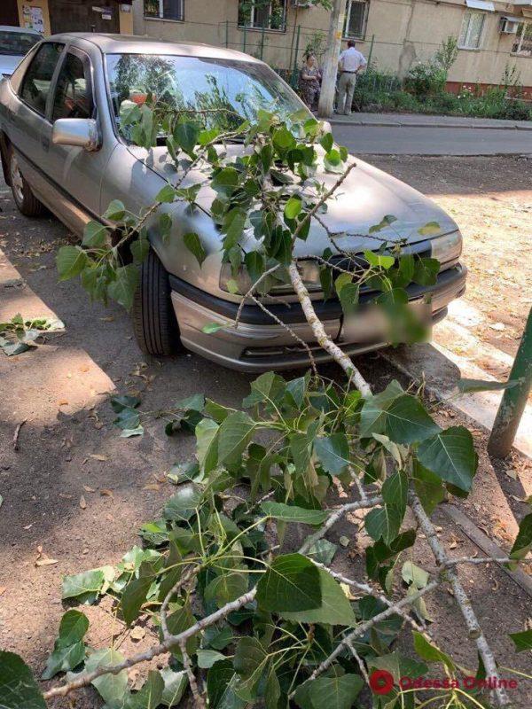На Таирова ветка рухнула на автомобиль и пробила лобовое стекло
