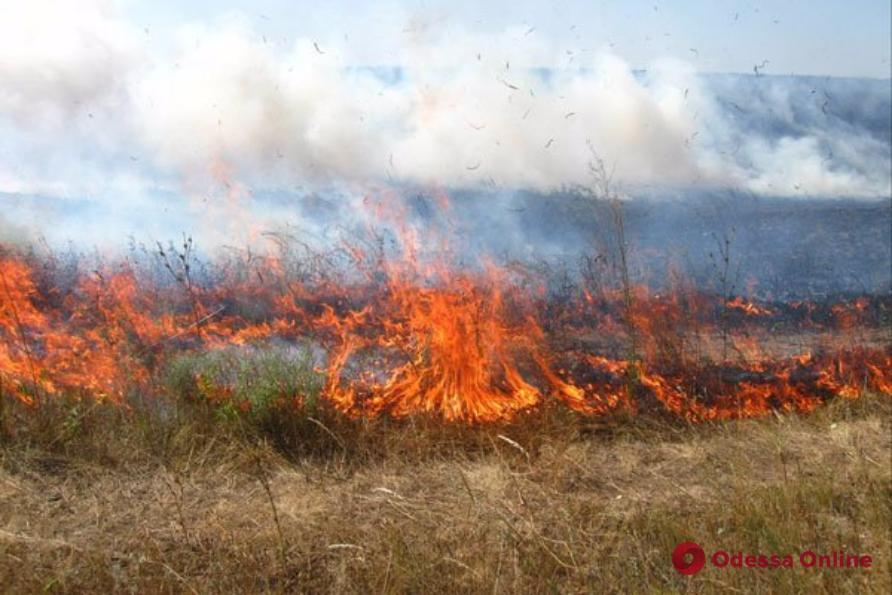 Возле курортного поселка в Одесской области тушили пожар