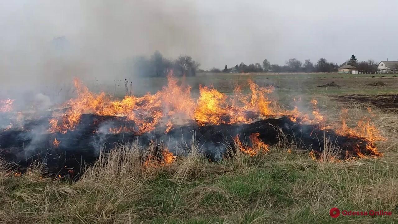 Под Одессой на большой площади горела сухая трава