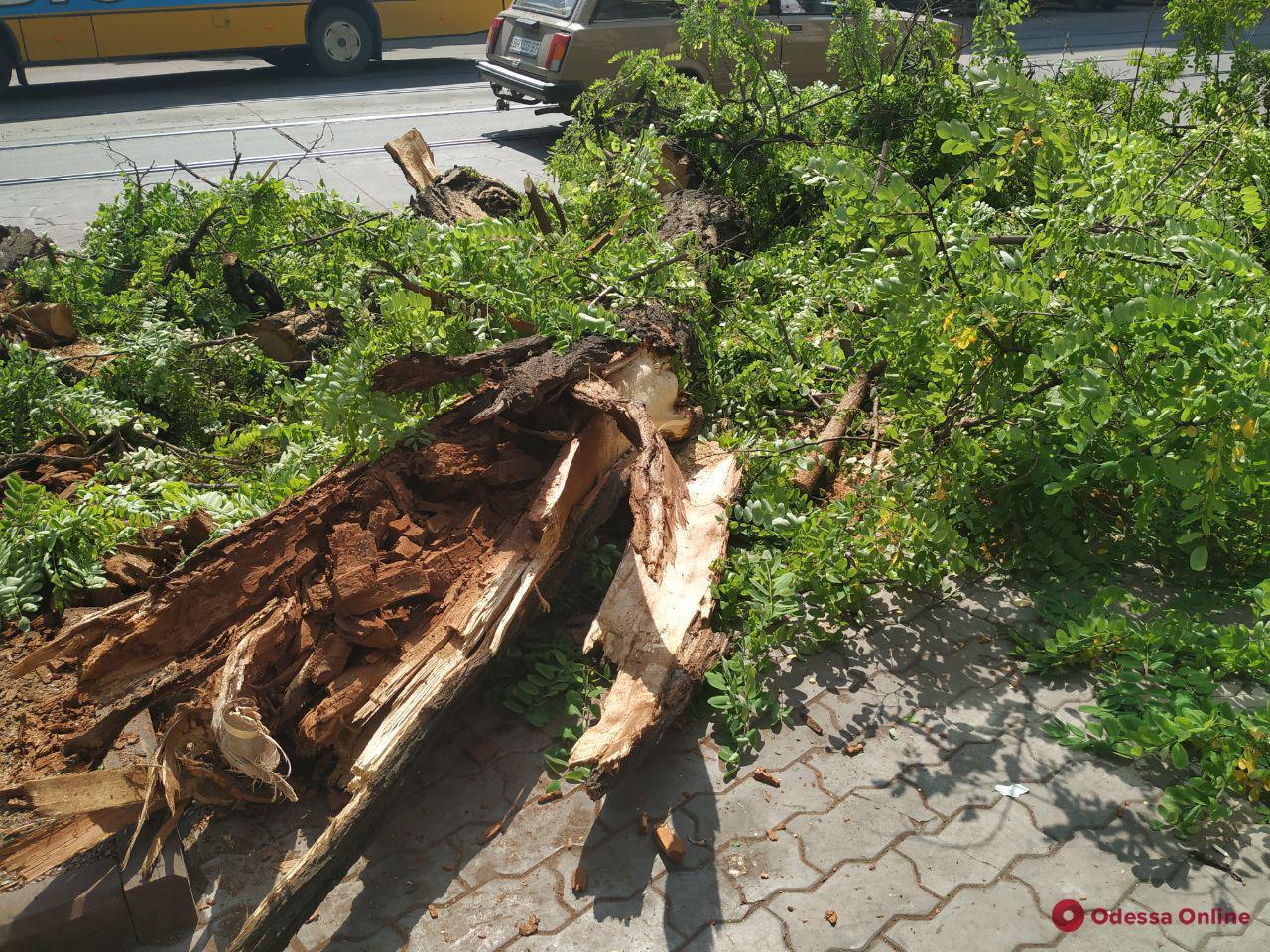 В центре Одессы на дорогу упала акация