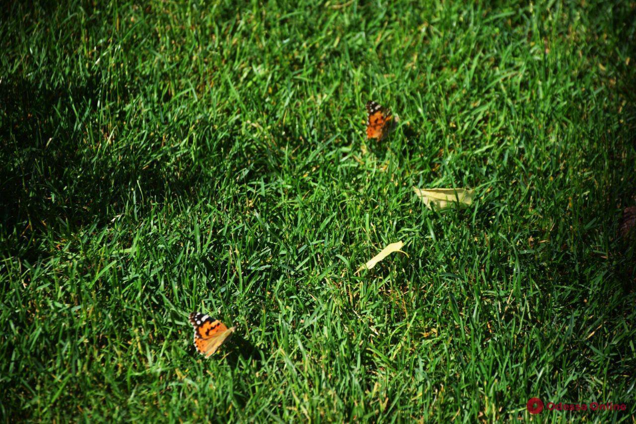 Лето в Летнем: бабочки облюбовали центр Одессы (фото)