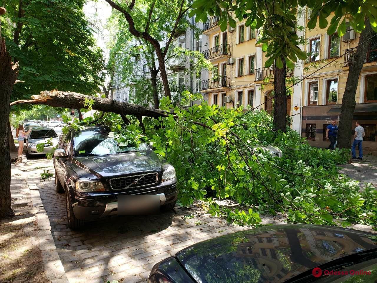 В центре Одессы крупная ветка упала на машины
