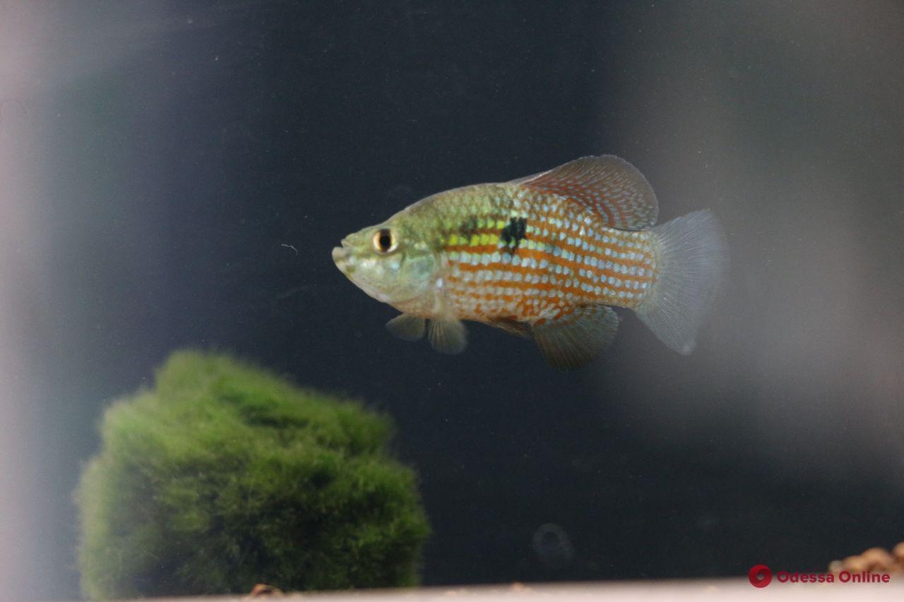 Одесситам показали уникальных аквариумных рыб (фоторепортаж)