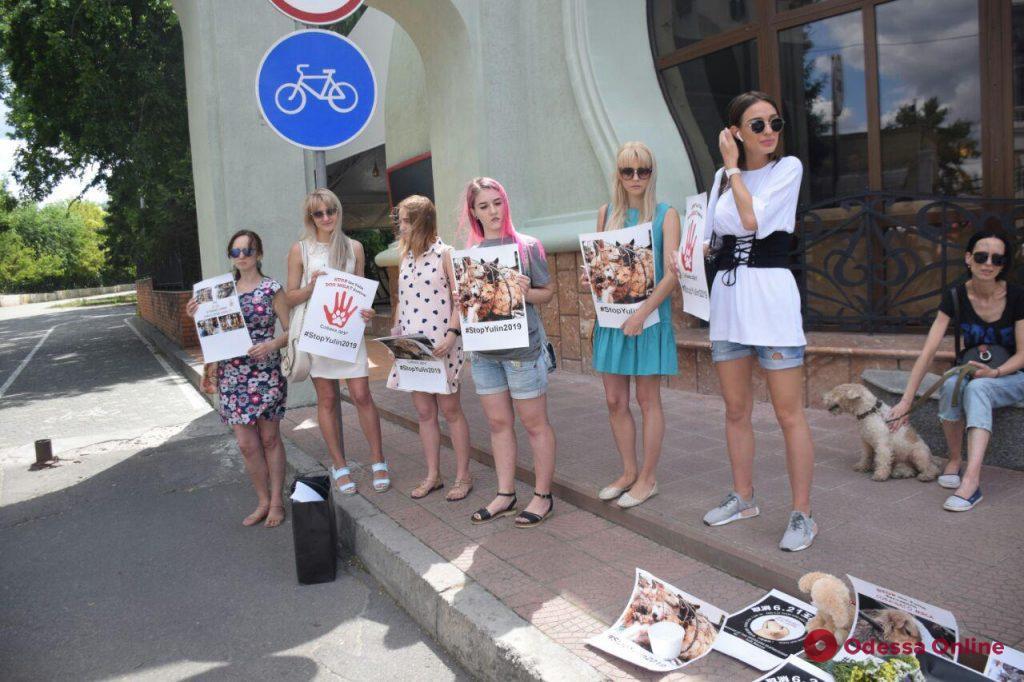 «Отрубают лапы и варят живьём» – одесситы присоединились к акции против фестиваля собачьего мяса в Китае