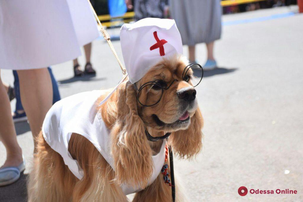 Выставка собак: в Одессу приехали более 200 четверолапых гостей со всей Украины