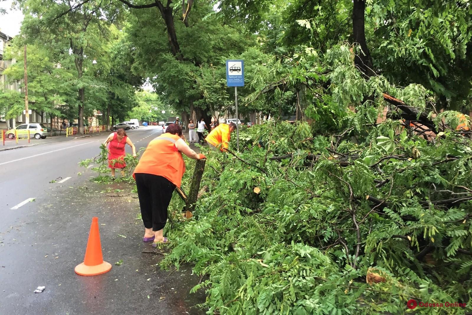 Последствия бури в Одессе: поваленные деревья, разбитые балконы и оборванные провода
