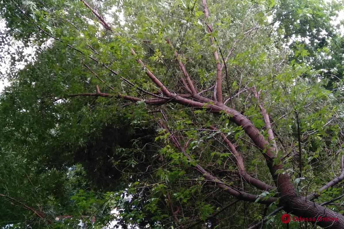 В центре Одессы дерево упало на электропровода