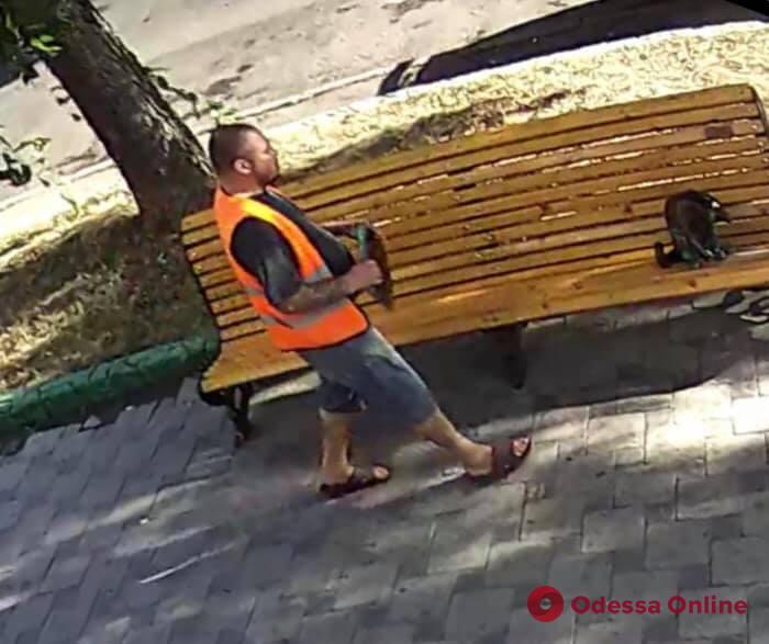 Одесская кошка Пушинка осталась без планшета (видео)