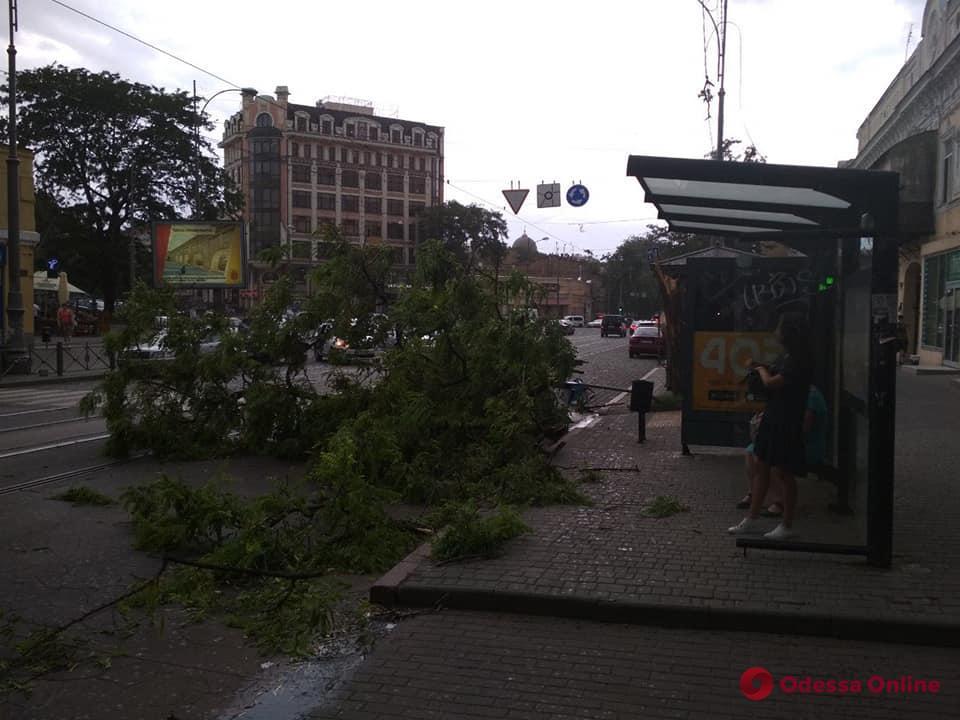 Непогода в Одессе: из-за сильного ветра падают деревья и ветки (фото)