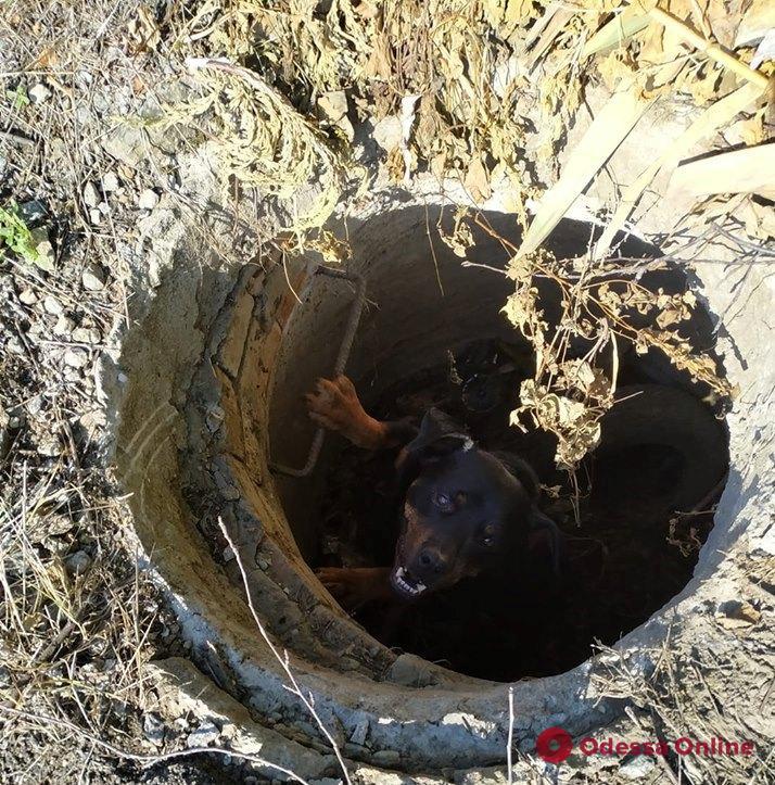 В Одесской области четверо спасателей доставали собаку из колодца