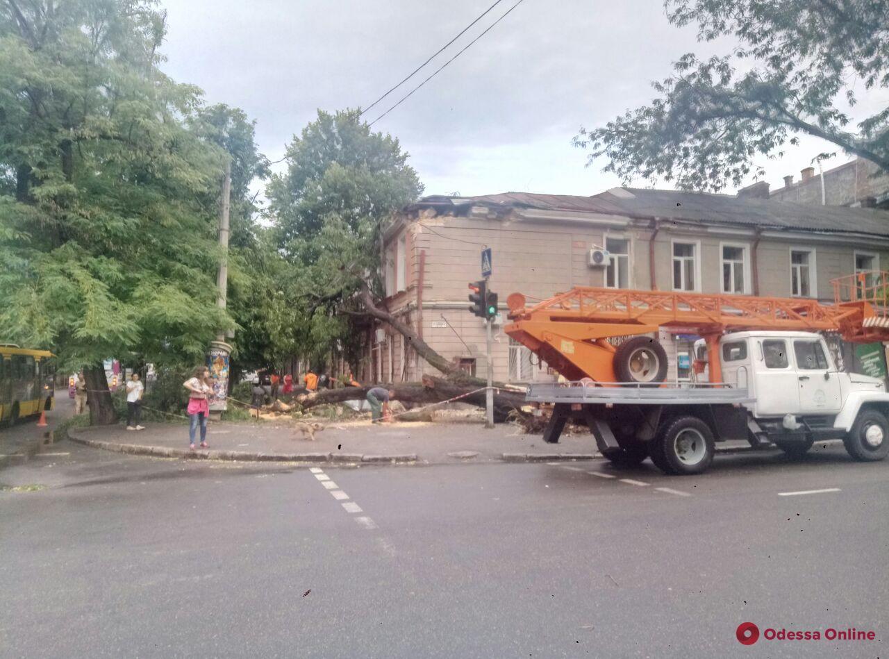 В центре Одессы упавшее дерево повредило крышу и фасад дома (фото, видео)