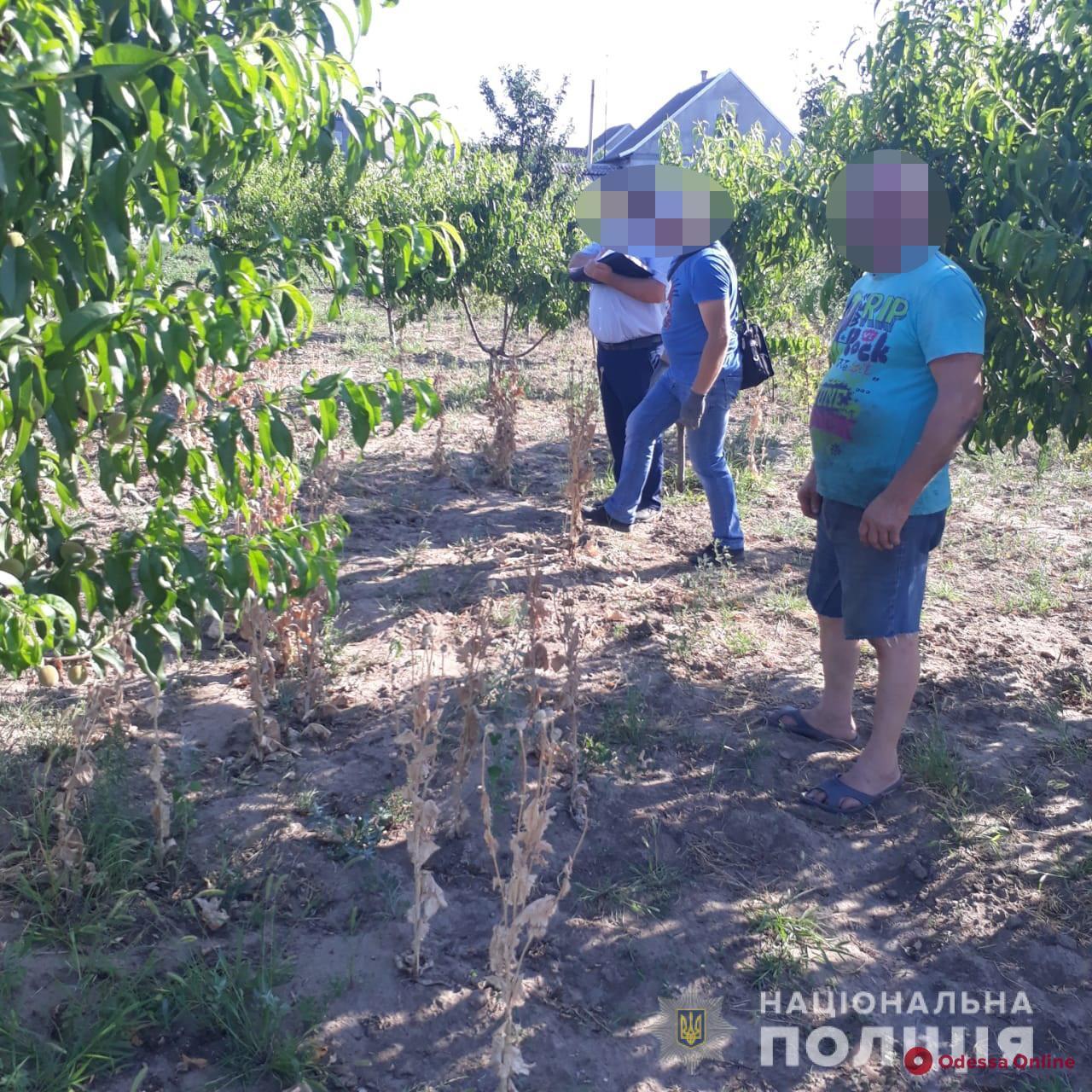 Одесская область: у пенсионера нашли маковую плантацию
