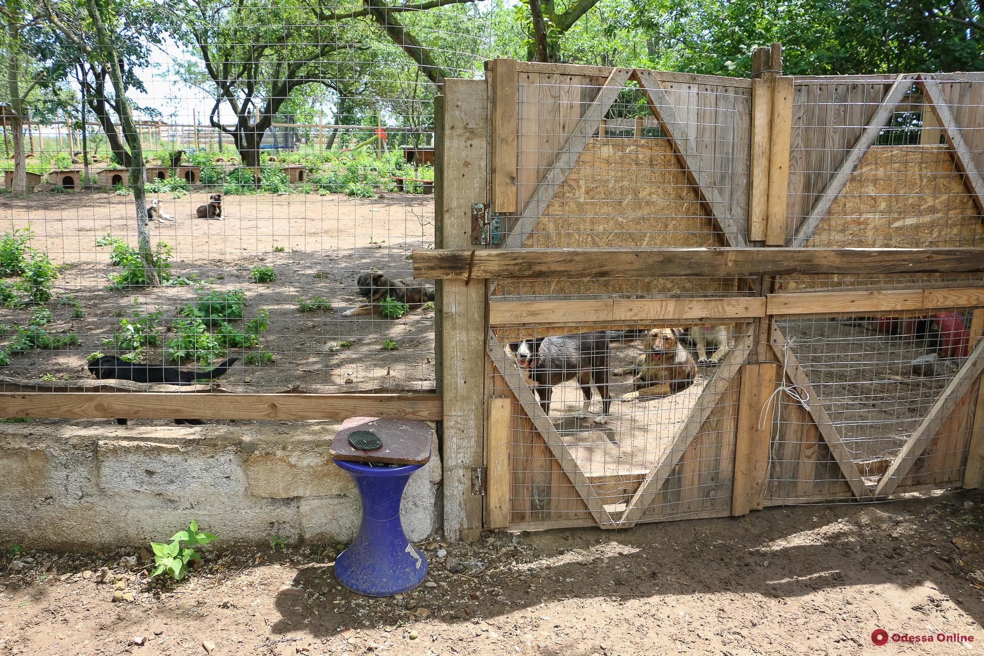 «Мои живые собаки»: о тех, кто возвращает животным доверие к людям