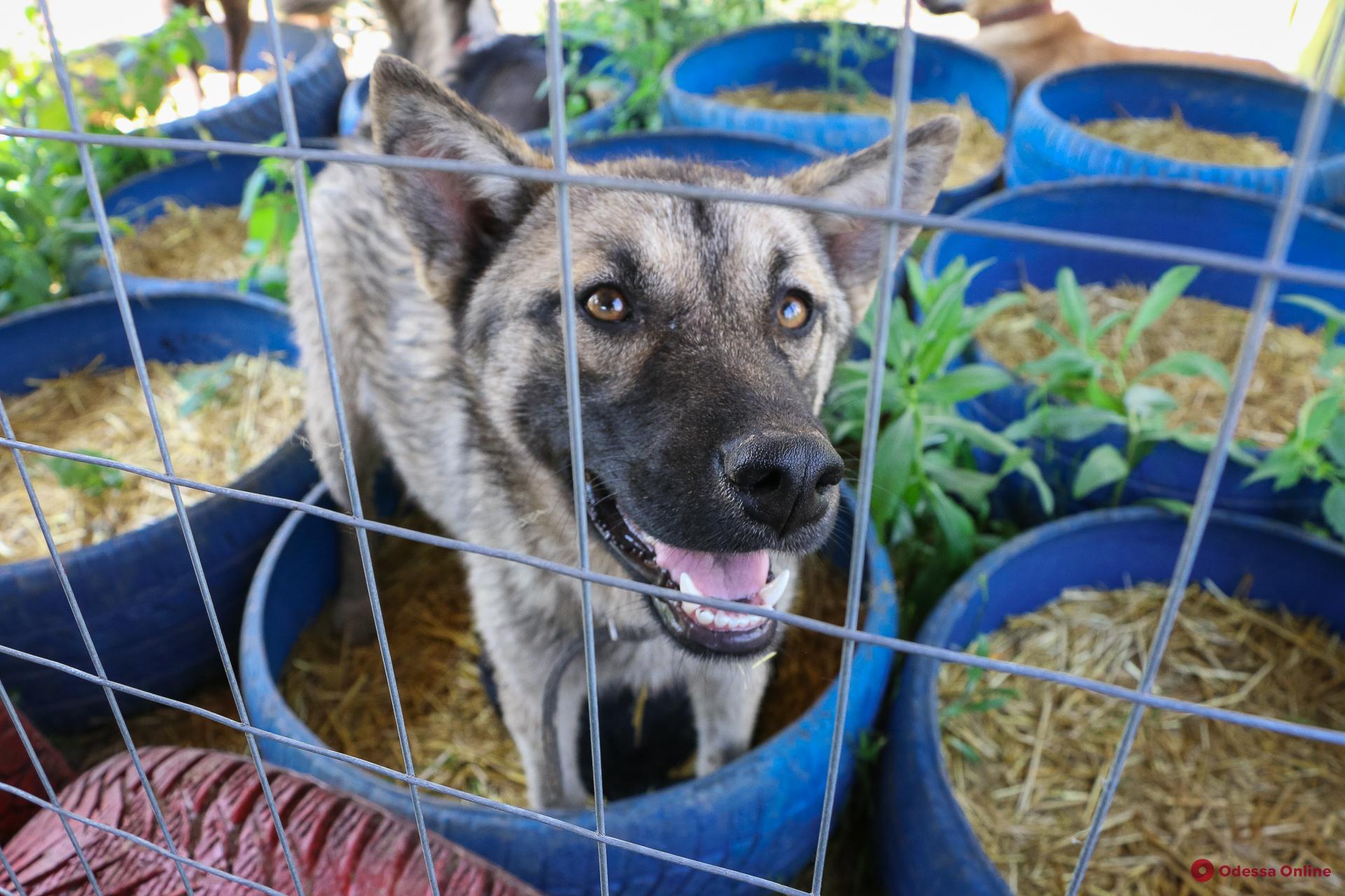 Международный день собак: какие они, одесские «барбосы» (фоторепортаж)