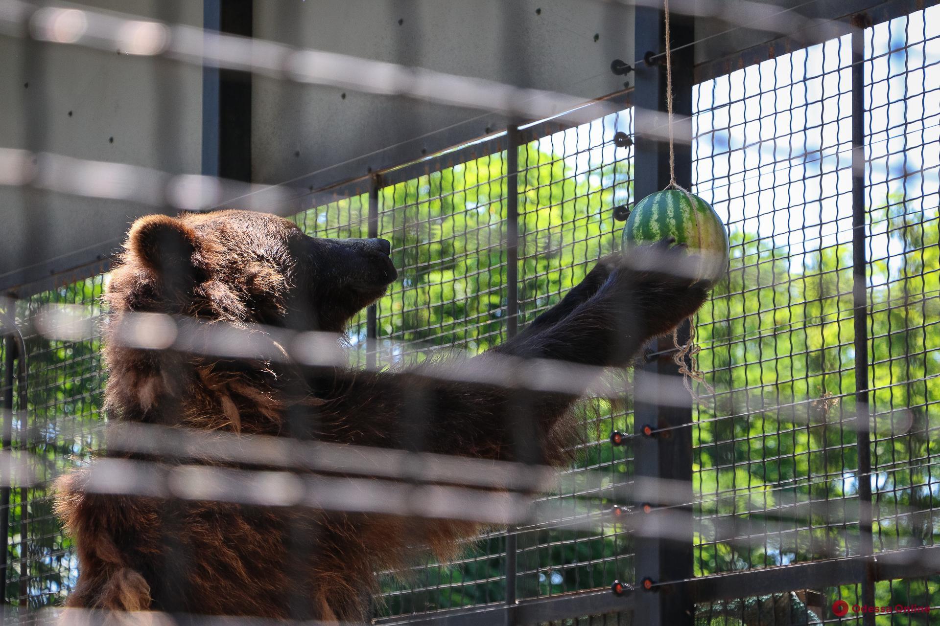 В Одесском зоопарке отпраздновали Ивана Купала