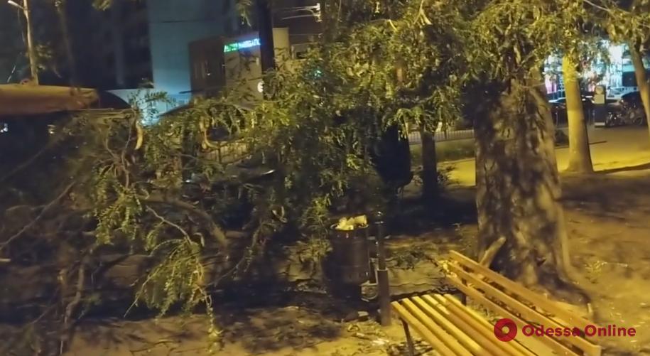 Ночью в парке Победы рухнуло дерево