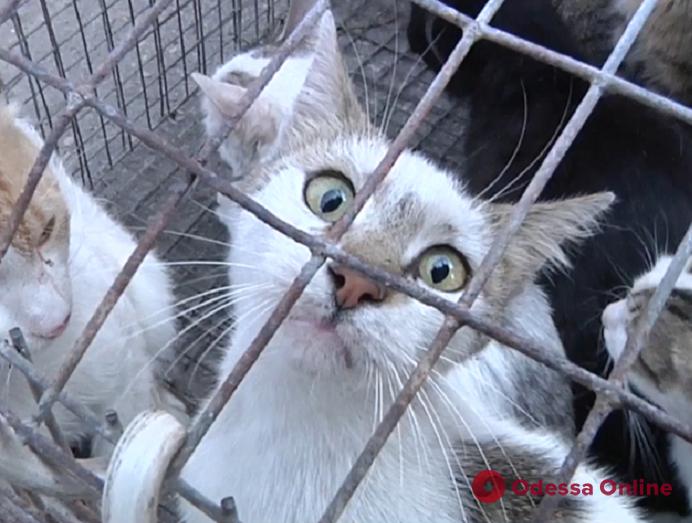 Коты из одесской колонии ищут новый дом