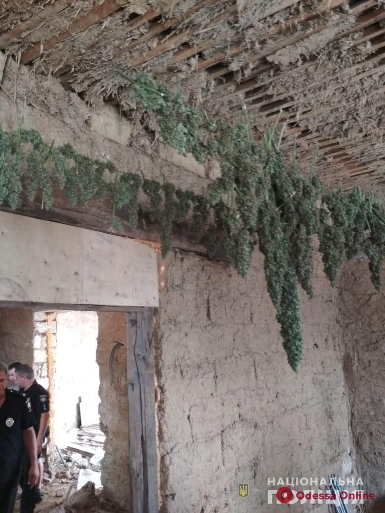 В Одесской области задержали очередного наркоагрария