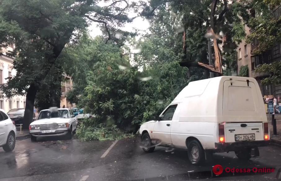 В центре Одессы большая ветка рухнула на дорогу (видео)