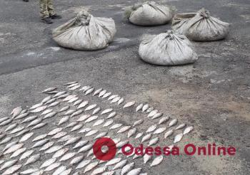Наловили рыбы на 46 тысяч: на юге Одесской области поймали браконьеров