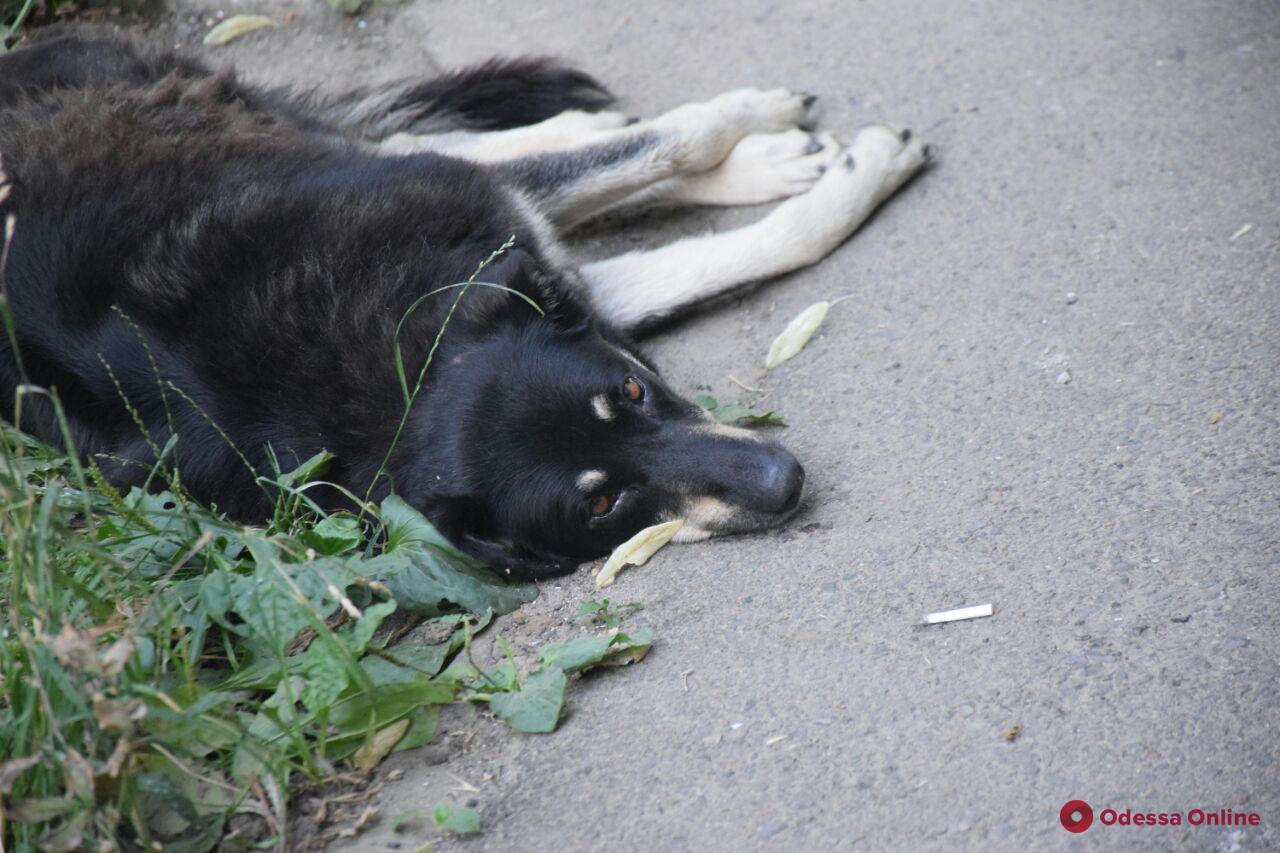 +34 за окном: знойный день в Одессе (фоторепортаж)