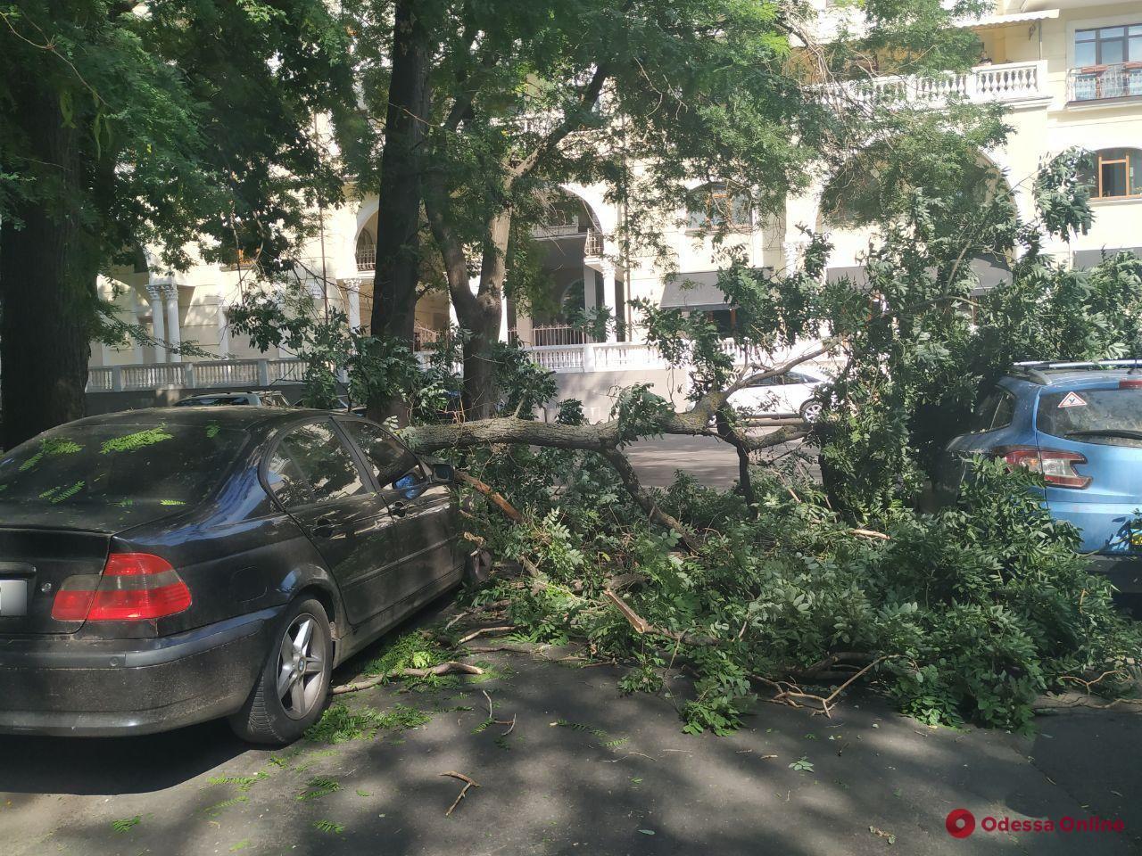 В центре Одессы крупная ветка рухнула на два автомобиля