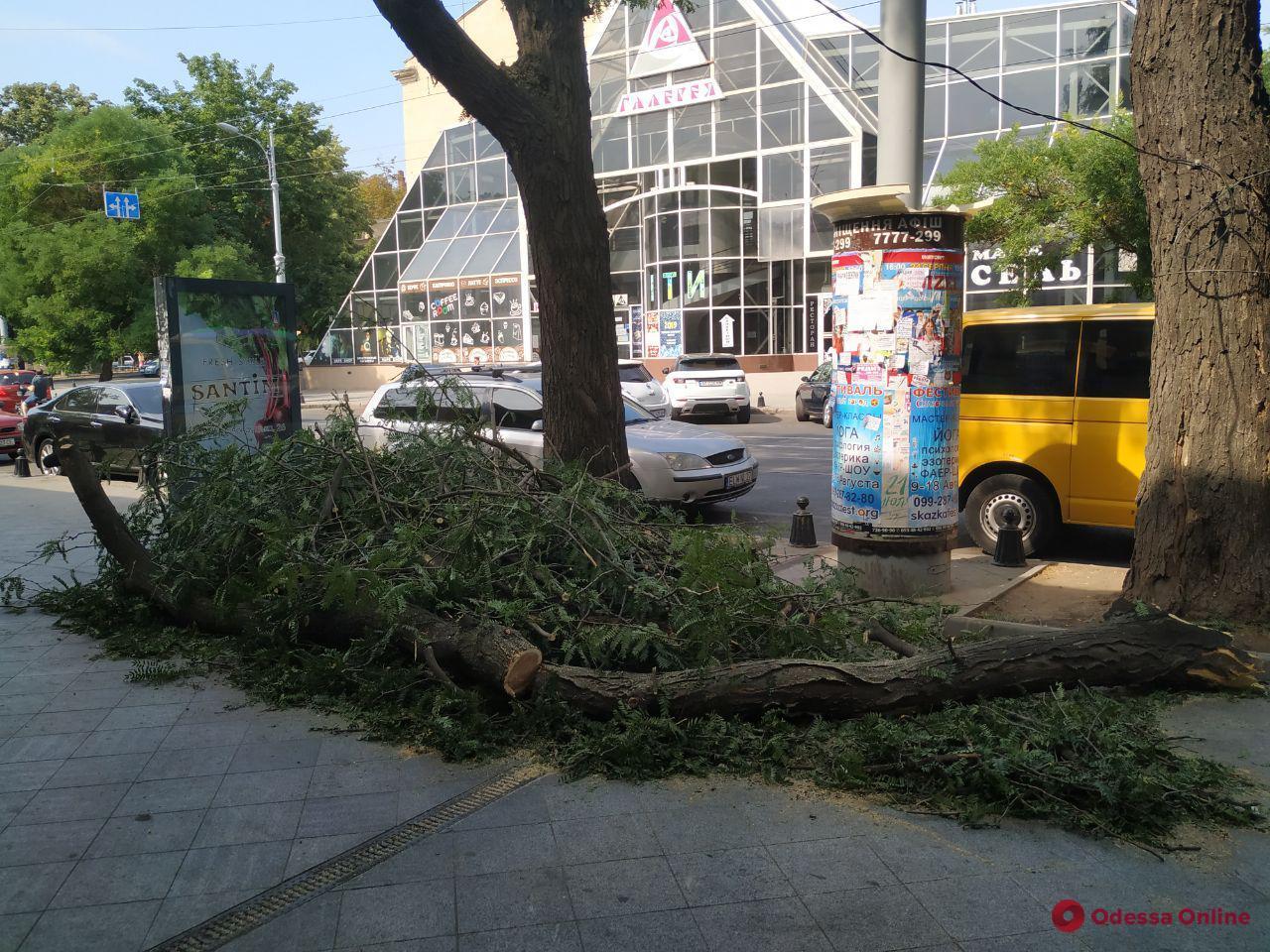 В центре Одессы ветка акации рухнула на тротуар
