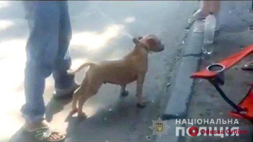 Мужчина украл у соседки собаку и продал на одесском рынке