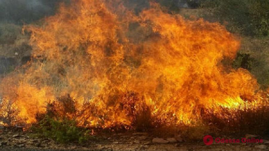 В парке Шевченко тушили пожар