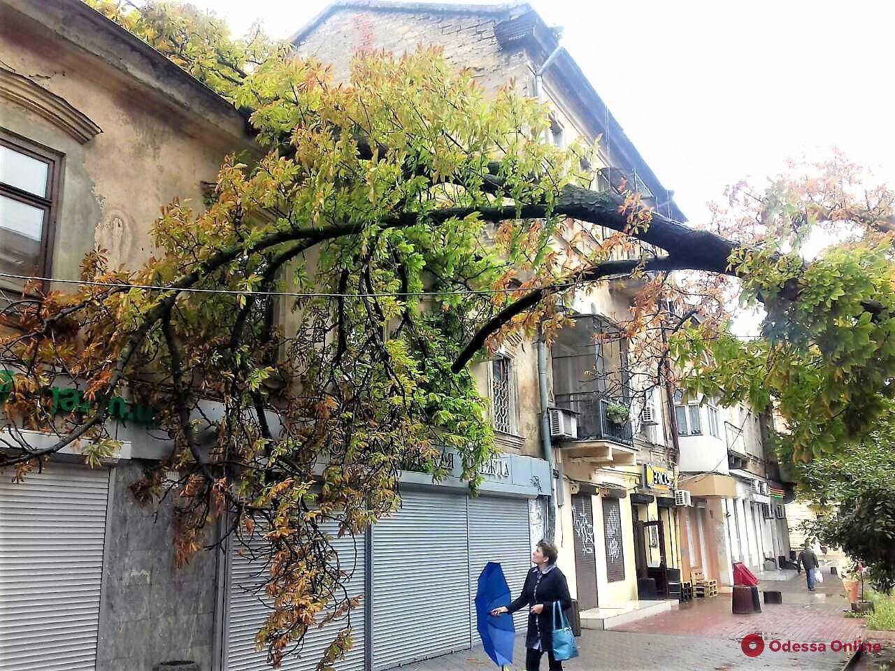 В Одессе сильный ветер повалил 26 деревьев и крупных веток