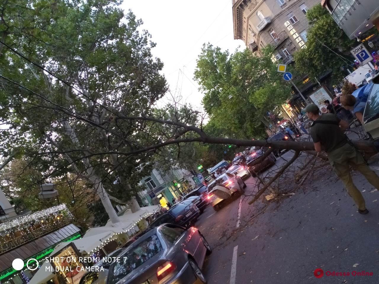 Огромная ветка упала на дорогу в центре Одессы