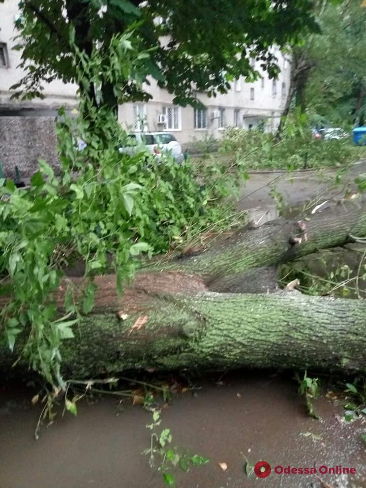 В Одессе из-за непогоды падают деревья
