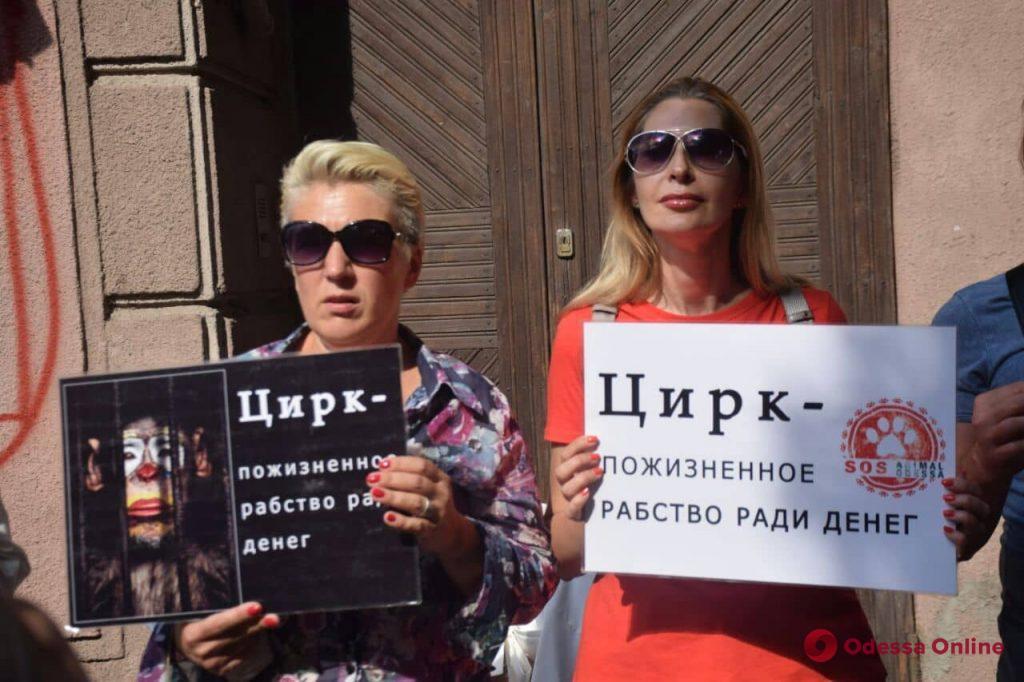 «Цирк без животных»: одесские зоозащитники провели митинг (фото)