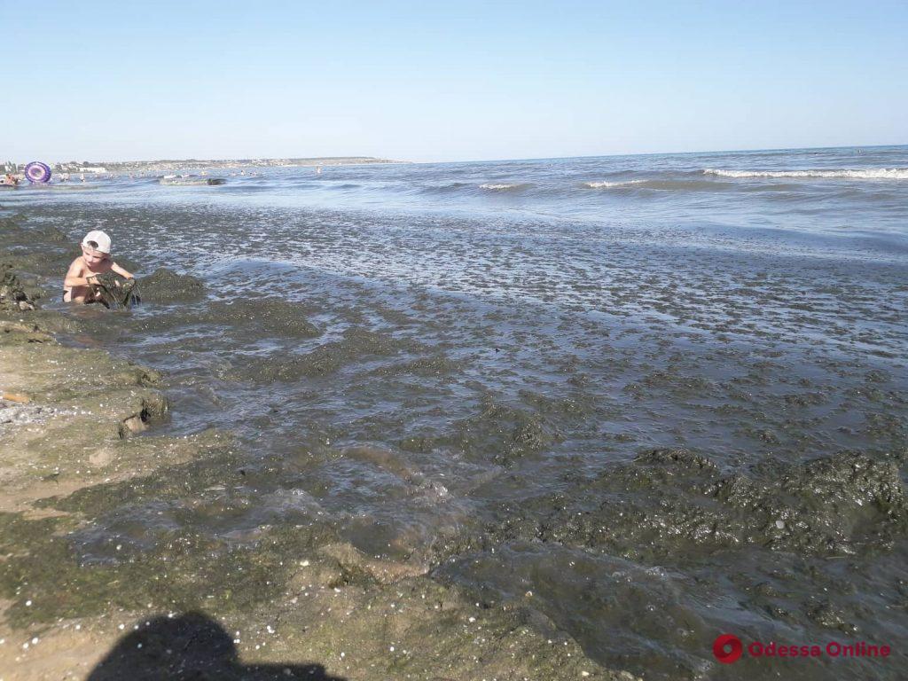 На пляжах в Лузановке почернела морская вода (фото, видео)