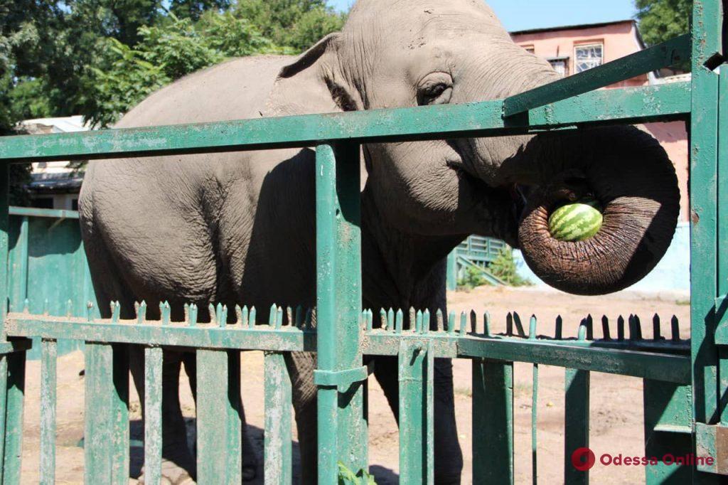 В Одесском зоопарке «ожили» мультфильмы (фото, видео)