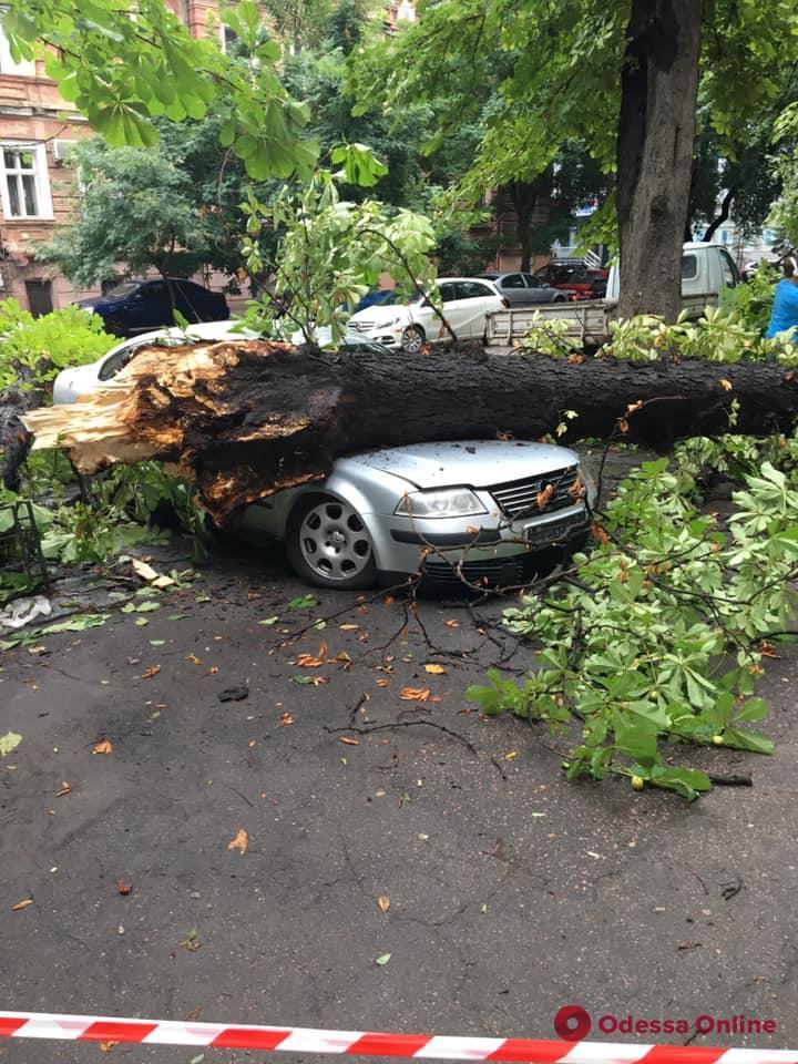 На Коблевской огромная ветка упала на припаркованные авто