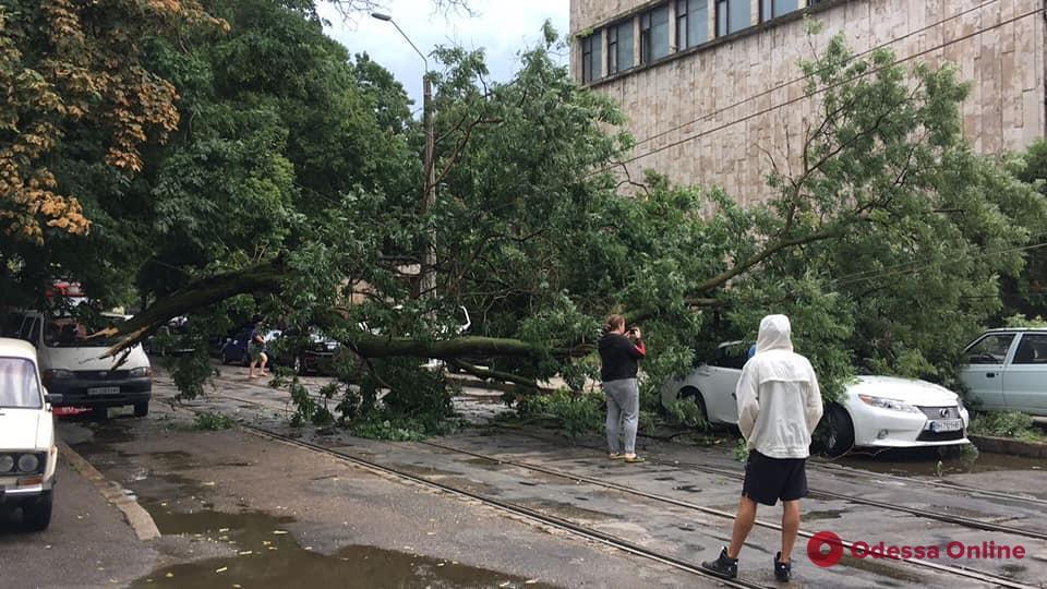 В Одессе ветер повалил 15 деревьев