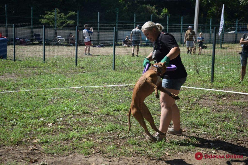 Dog Puller: в Одессе выбирают лучшую собаку (фоторепортаж)