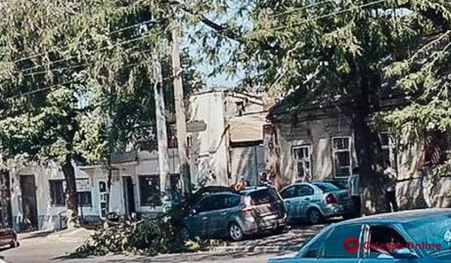 В Одессе крупная ветка рухнула на припаркованные авто