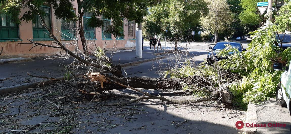 В центре Одессы дерево рухнуло на дорогу
