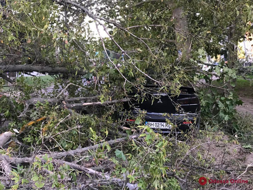 Огромная ветка упала на автомобили в Аркадии