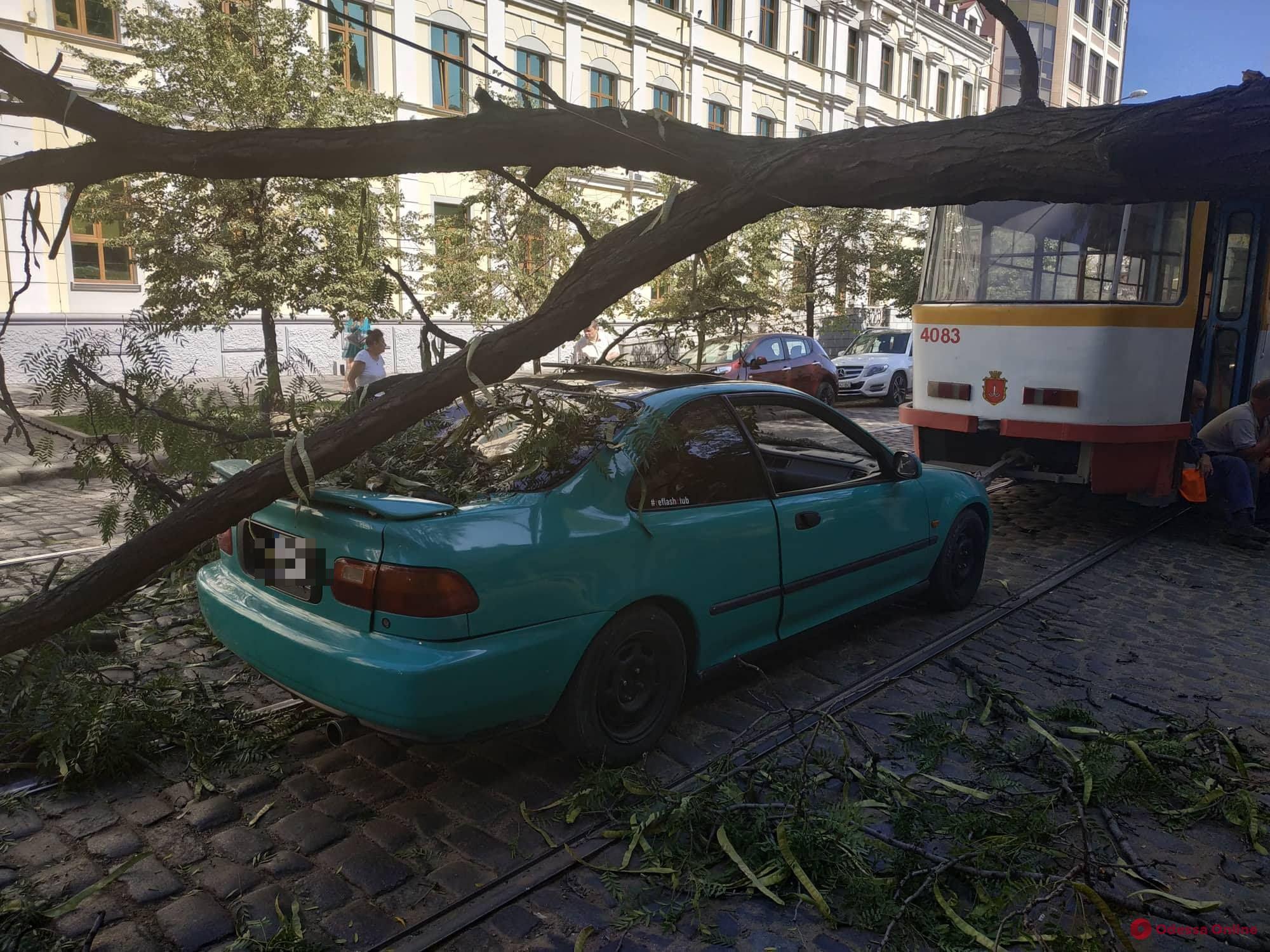 В центре Одессы дерево рухнуло на контактную сеть — не ходит 15-й трамвай (обновлено, фото)