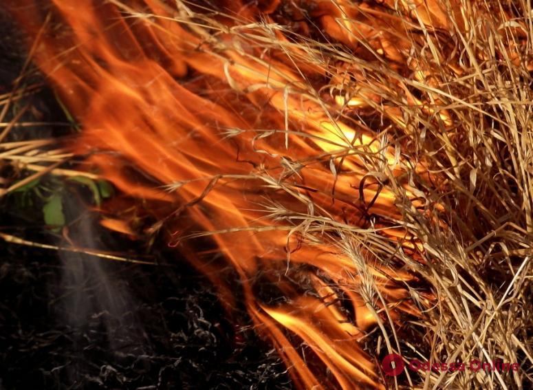В Одесской области за одни сутки спасатели 16 раз тушили сухую траву