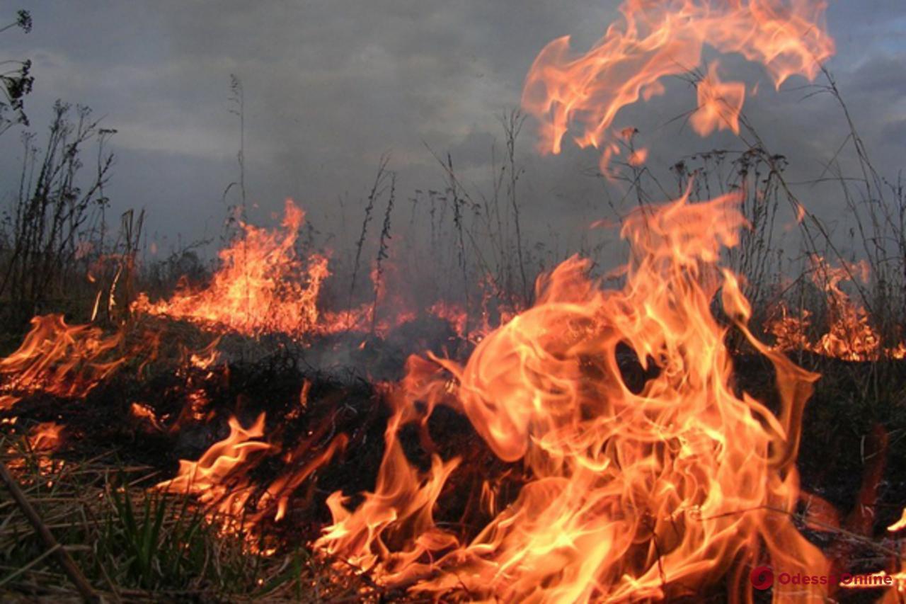 На Таировском кладбище горит мусор (видео)