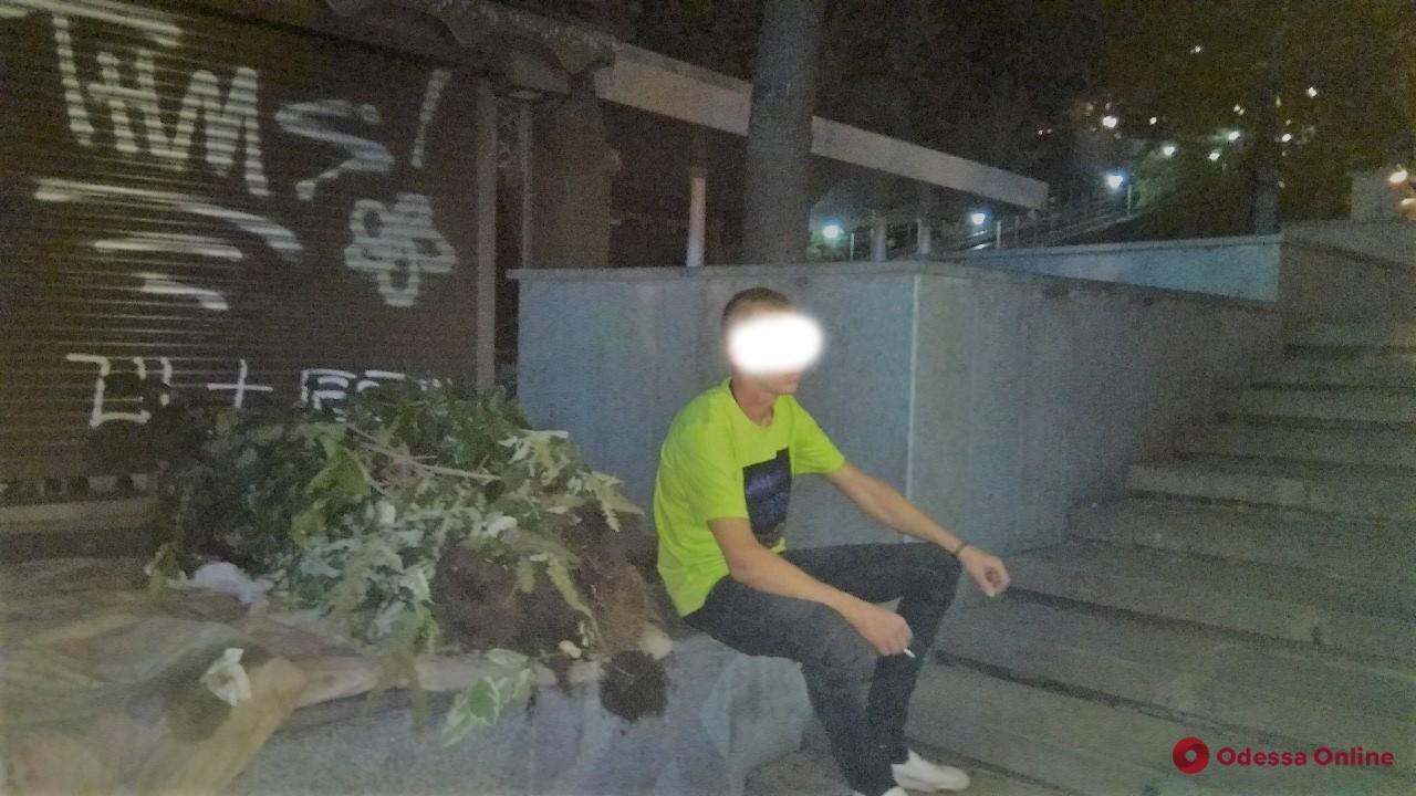 Вандал вырвал с корнями декоративные растения в Греческом парке